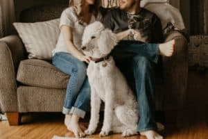 Moving with pets - cat and dog with owner